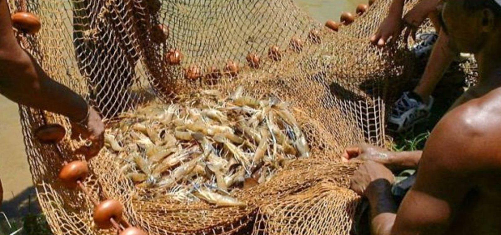 Após manchas de óleo, pesca de camarão e lagosta será proibida em regiões da Bahia