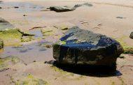 Amostras de peixe apresentam níveis de contaminação por óleo