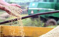 Exportação de arroz dispara 81%; Venezuela é maior compradora do Brasil
