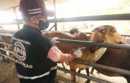 Bahia deve vacinar 3,5 milhões de animais contra a febre aftosa até o final do mês de novembro