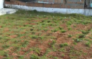 Covid-19: Governo da BA aluga contêineres para armazenar corpos e prefeitura de Salvador amplia vagas em cemitérios