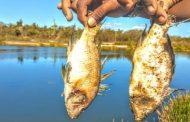 Feira de Santana: moradores denunciam mortandade anormal de peixes após chuva